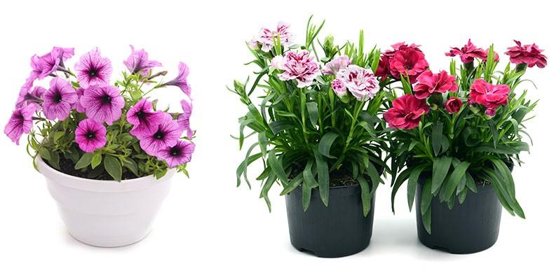offrir différents modèles de bouquets à Sées – C'Fleurs