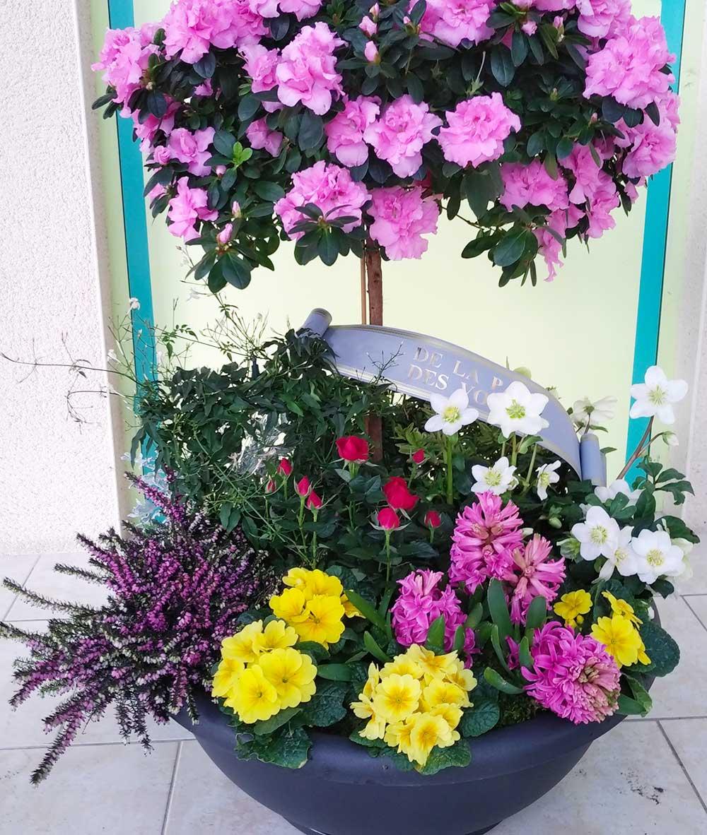 grande diversité de plantes vertes à Sées – C'Fleurs