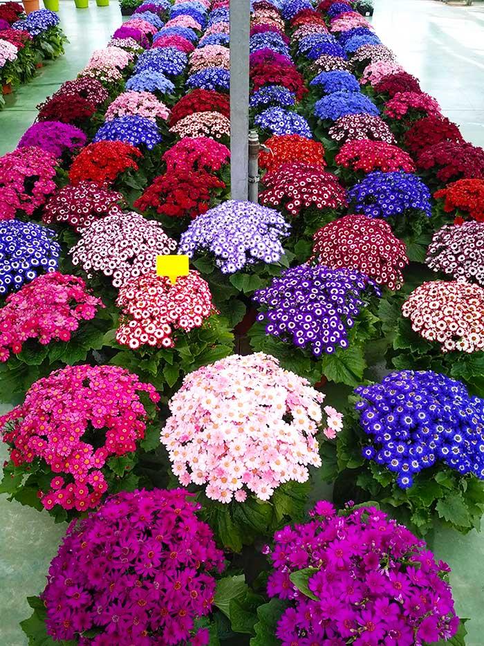 notre jardin fleuriste à Sées – C'Fleurs