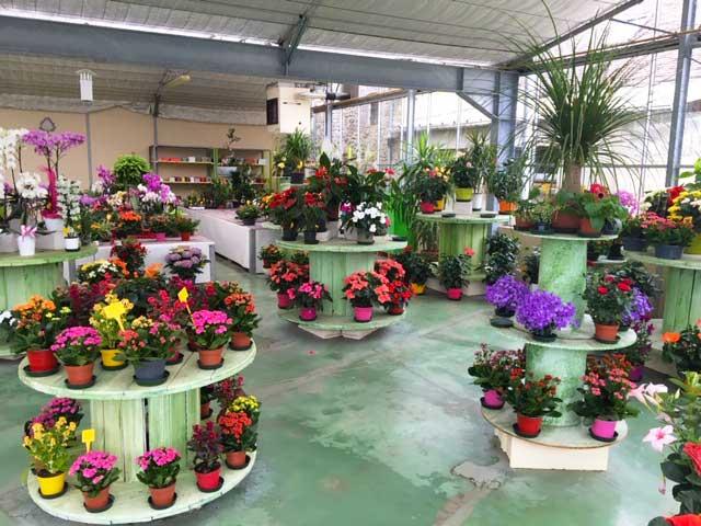 Notre horticulteur et fleuriste à Sées – C'Fleurs